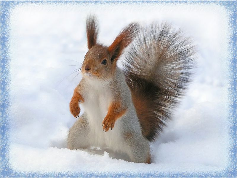 Wait, one more take? | squirrel, snow