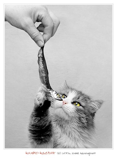 The cat casting