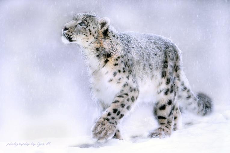 At snowfall