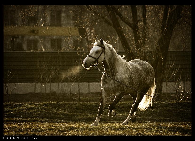 Sun | sepia, grass, horse, motion
