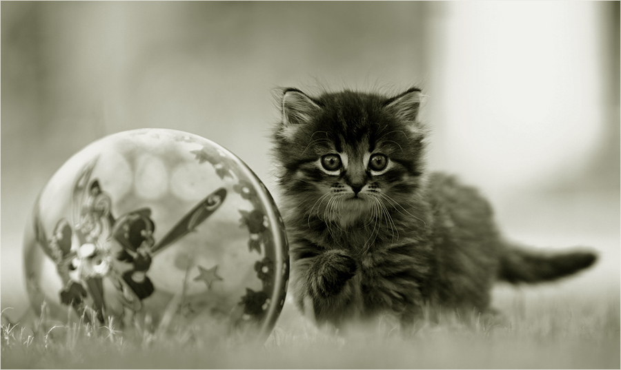 About meow and ball | grass, cub, black and white, cat