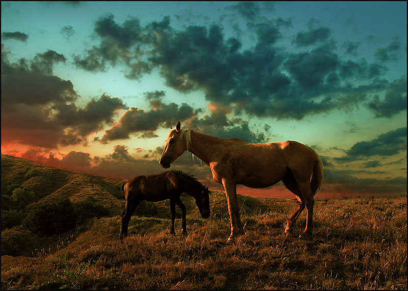 Evening Palette | sky, field, grass, horse
