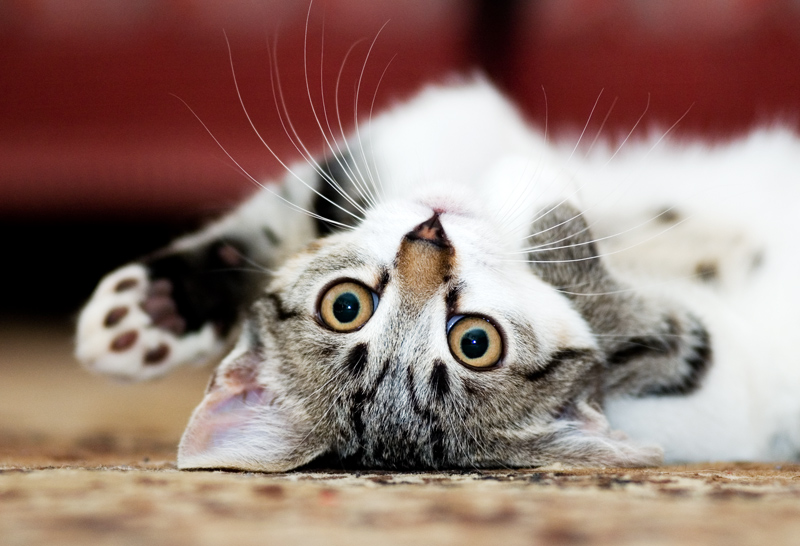 Upside down | whiskers, cat