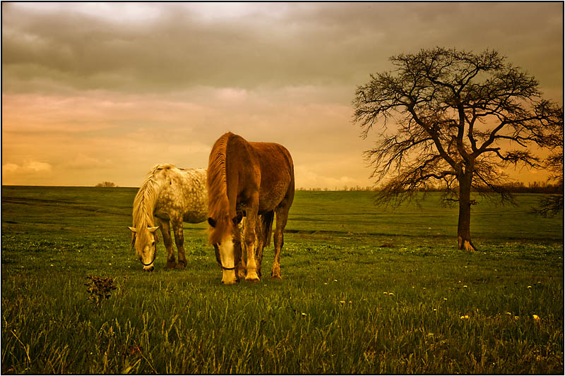 meal | food, pair, grass, field, horse