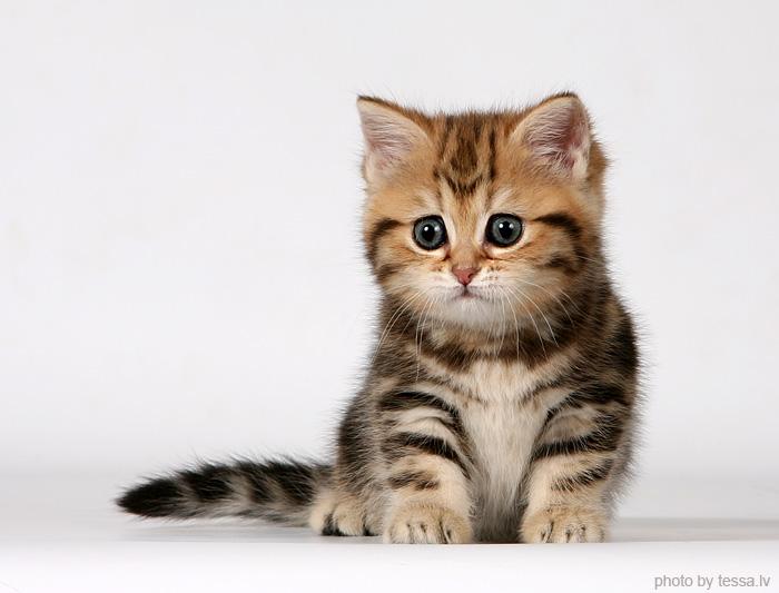 KittenFeet