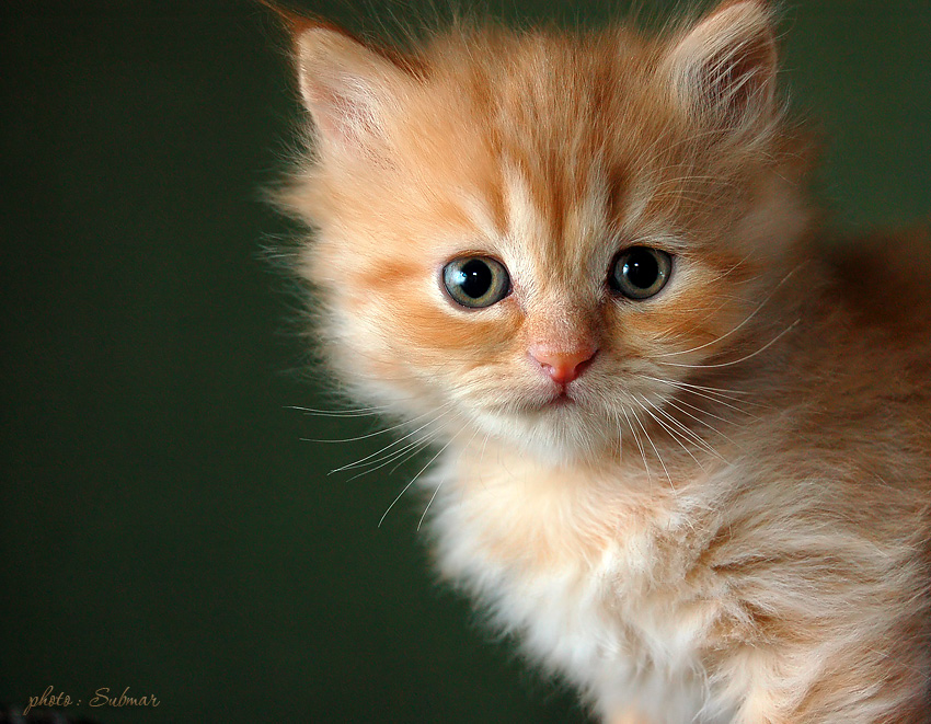 A portrait of a serious kitten