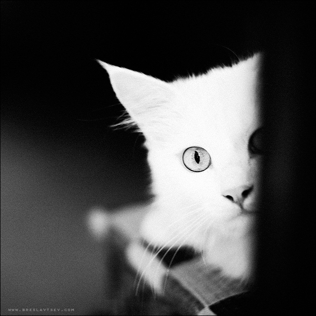 ... a cat or a kitty | black and white, cat