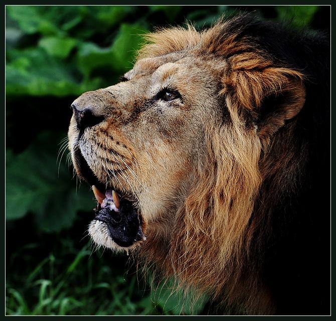 And a great roar was heard!