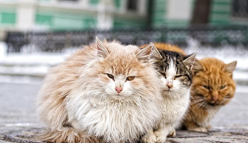 Warmer together