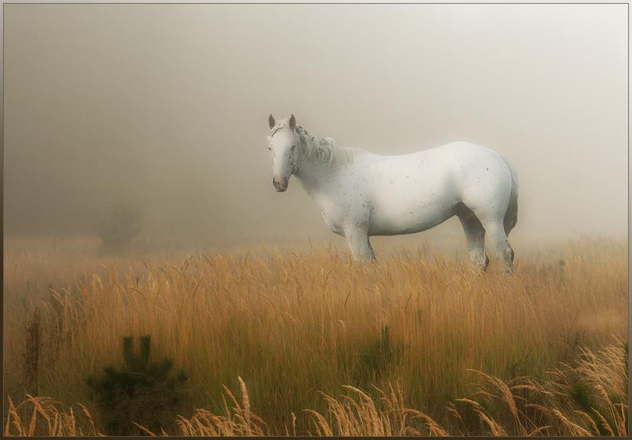 Fog | horse, field