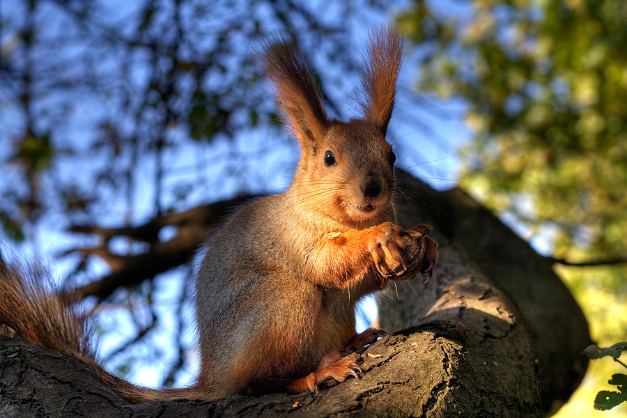 A squirrel from Odessa