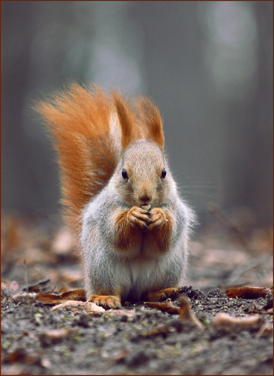 ...and nibbling on nuts