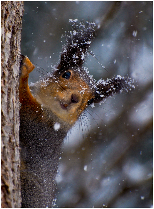 Who's here? | squirrel, snow