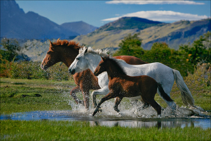 Family | water, motion, cub, horse, pair