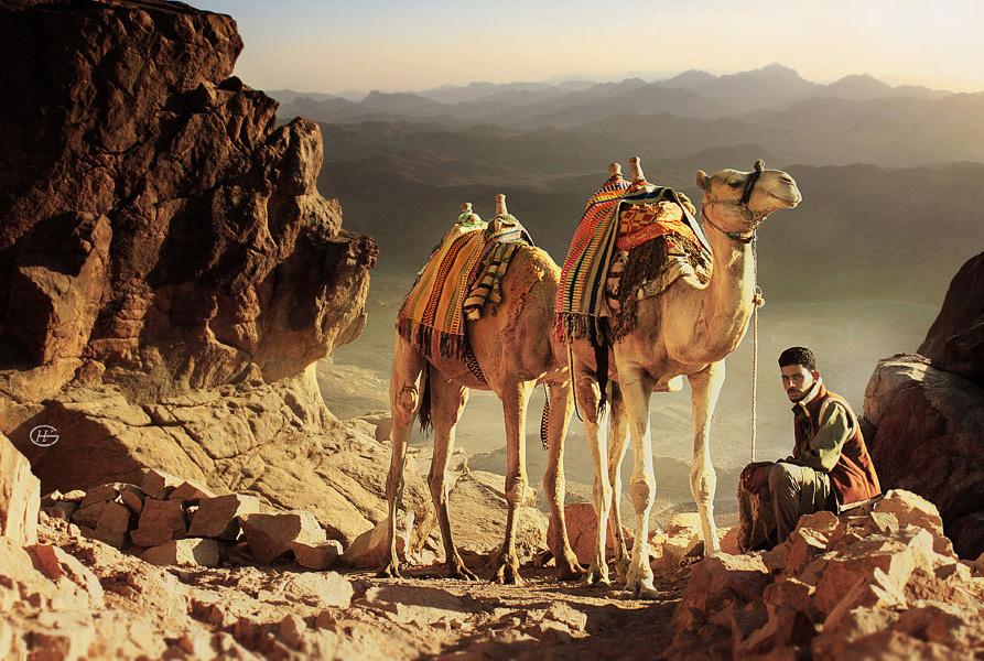 Rental camel