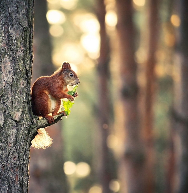 The forest saxophone player | Animals photos
