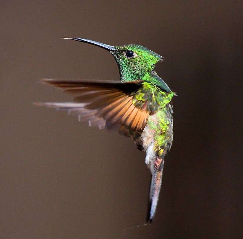 A moment in the air | colibri, bird, motion