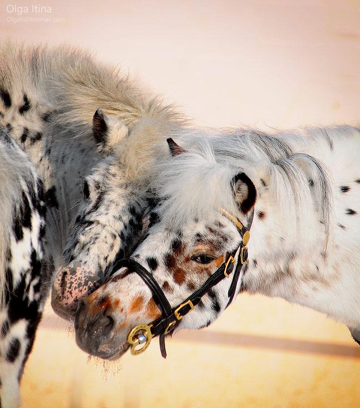 Love | pair, horse