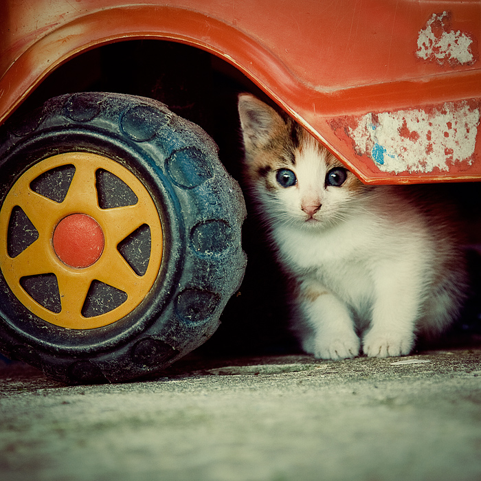 An auto mechanic | Animals photos