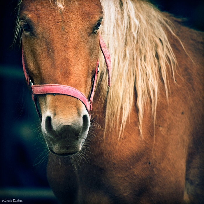 A beauty | horse