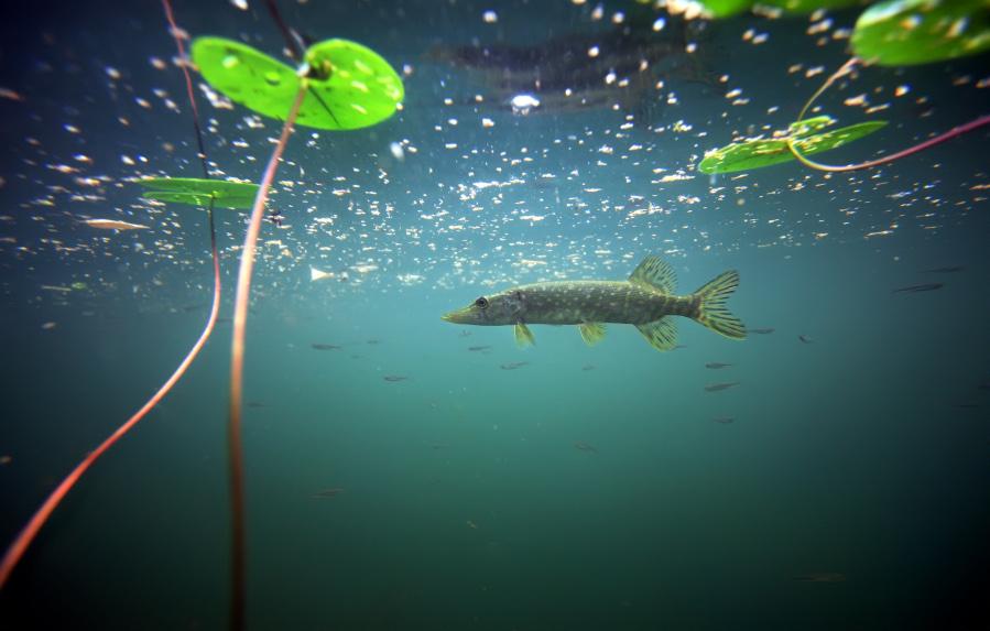 Underwater patrol