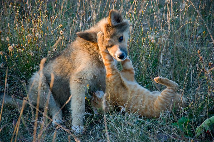 Friendship of opposites | cub, cat, lie, pair, field, dog