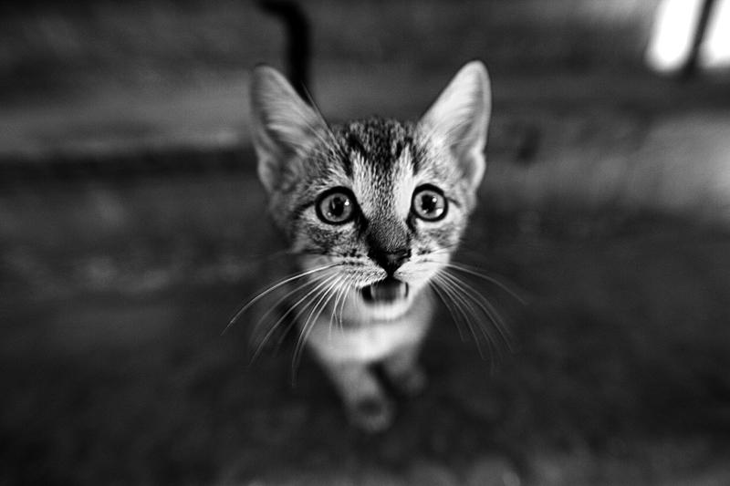 I'm hungry | food, cat