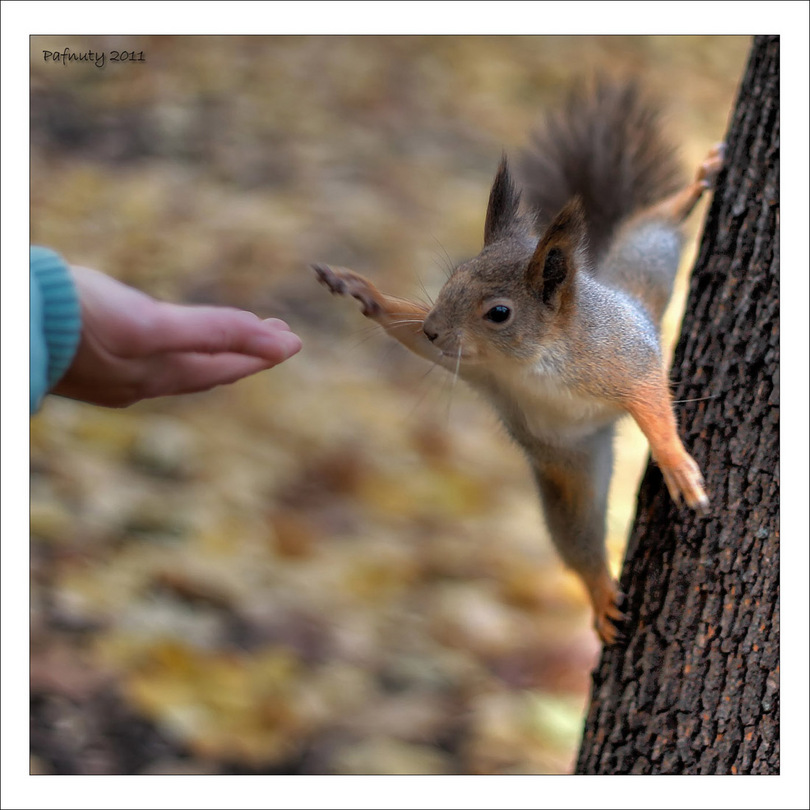 High five! | squirrel, motion