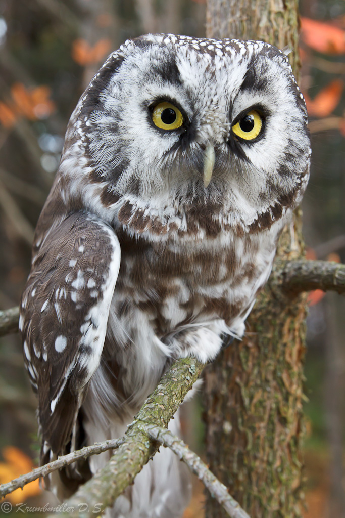 Close observation | bird, owl, branch