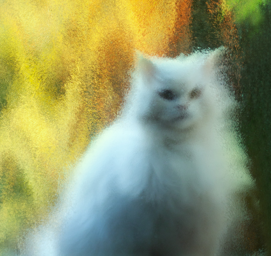 White cat in frosted glass