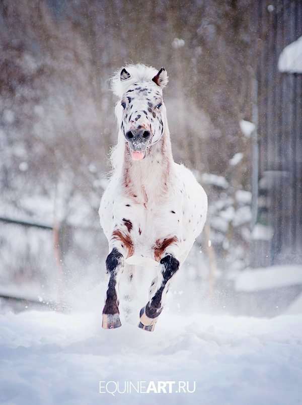 Cheerful horse