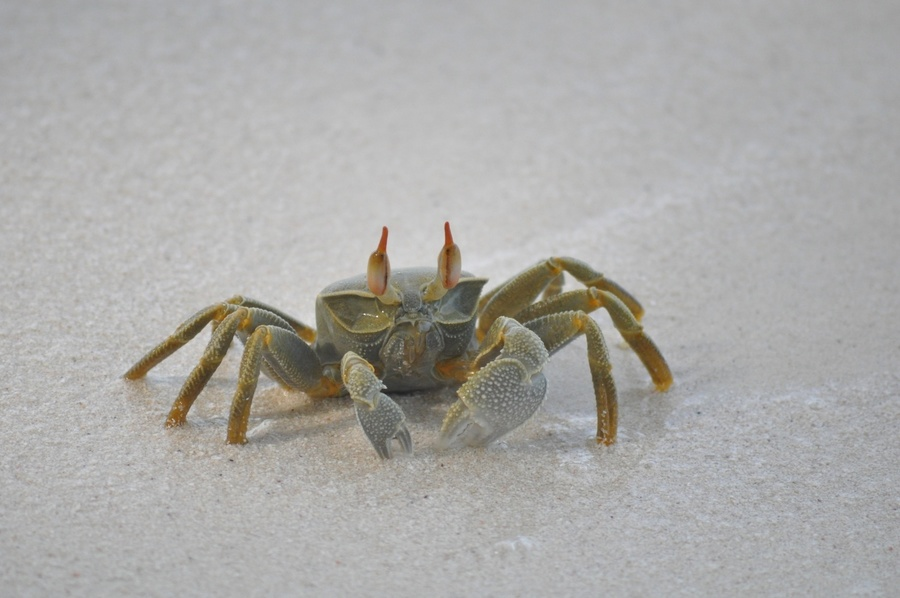 Crab on the sand