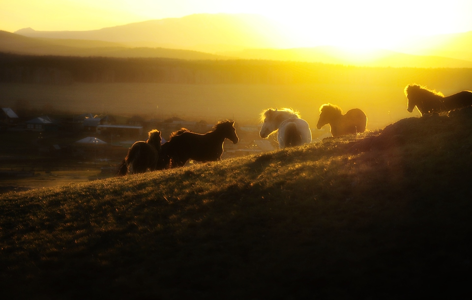 Silhouette of the herd of horses against the sunset in the mountains
