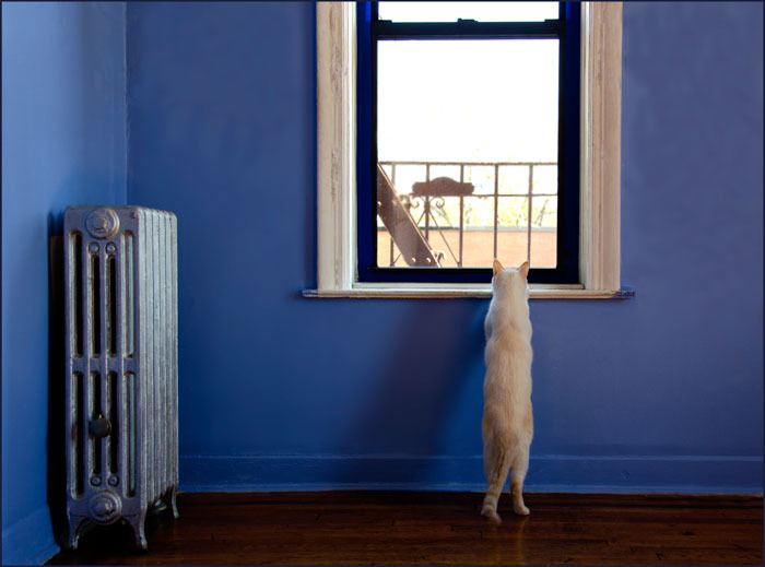 the white cat standing on hinder legs looks out of the window