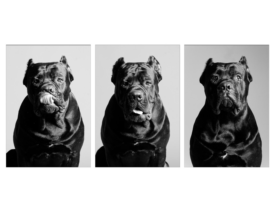 Different moods of dog