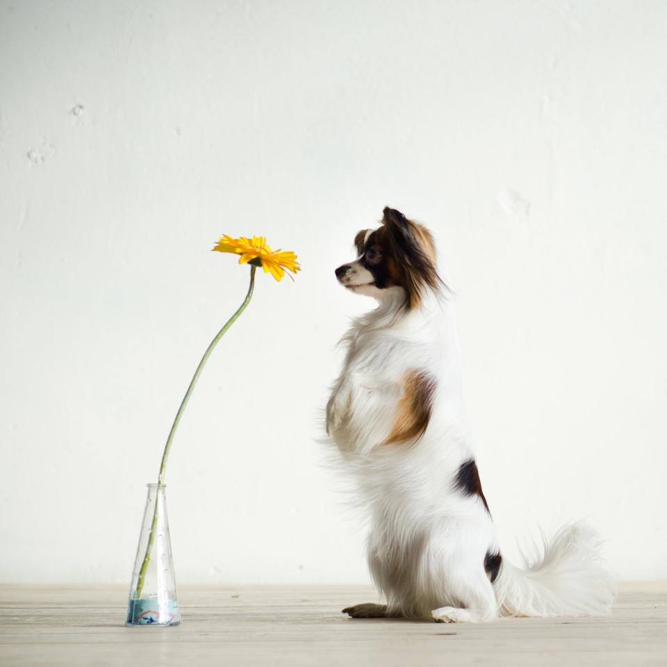Dog likes flowers