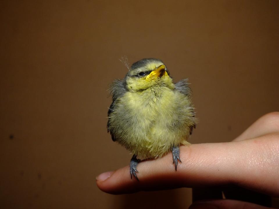 Bird sitting on the finger