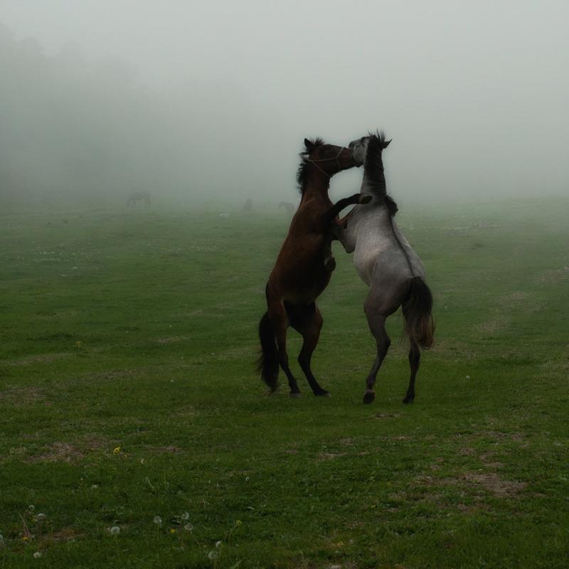 Horses danсing