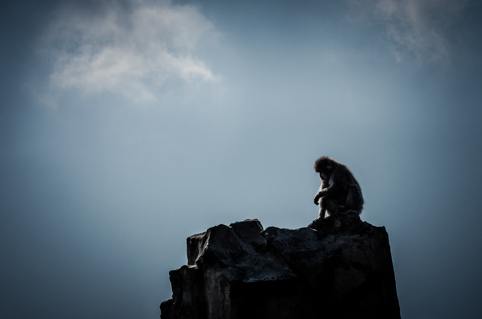 Monkey sitting on a cliff