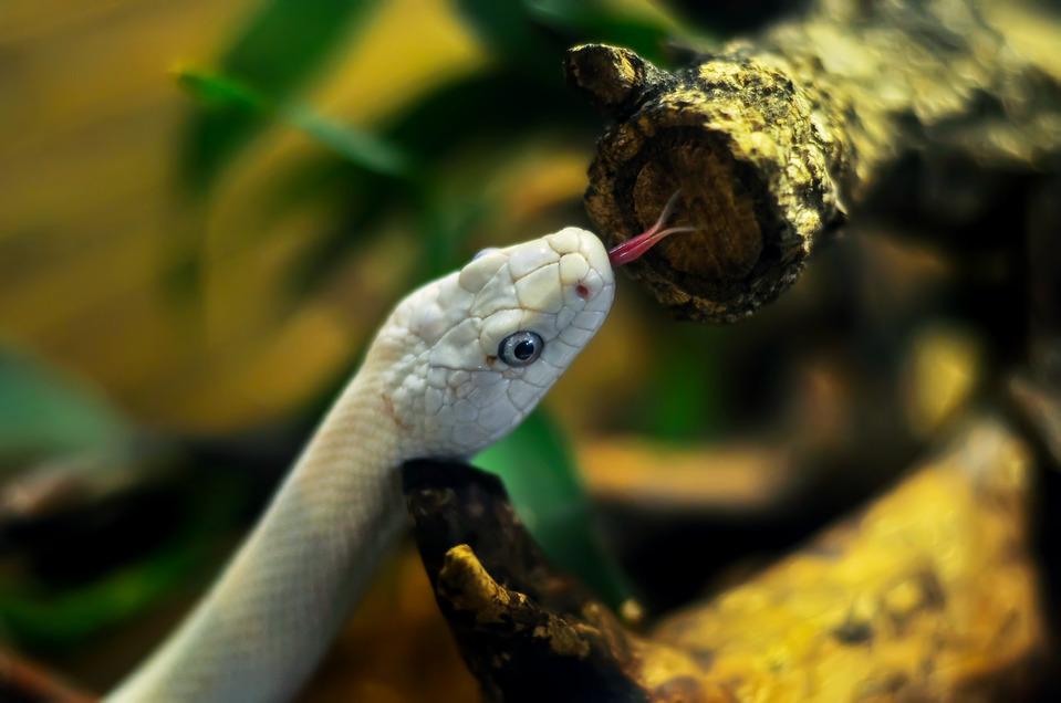 Snake hunting