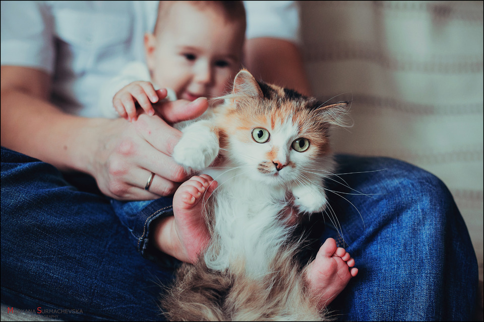 Father, child and cat together