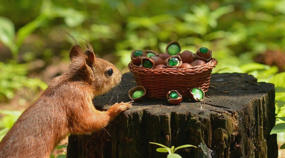 Squirrel and treasure