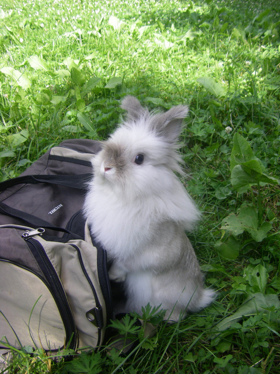 Rabbit and bag