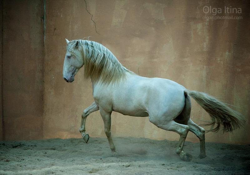 Stonelike horse