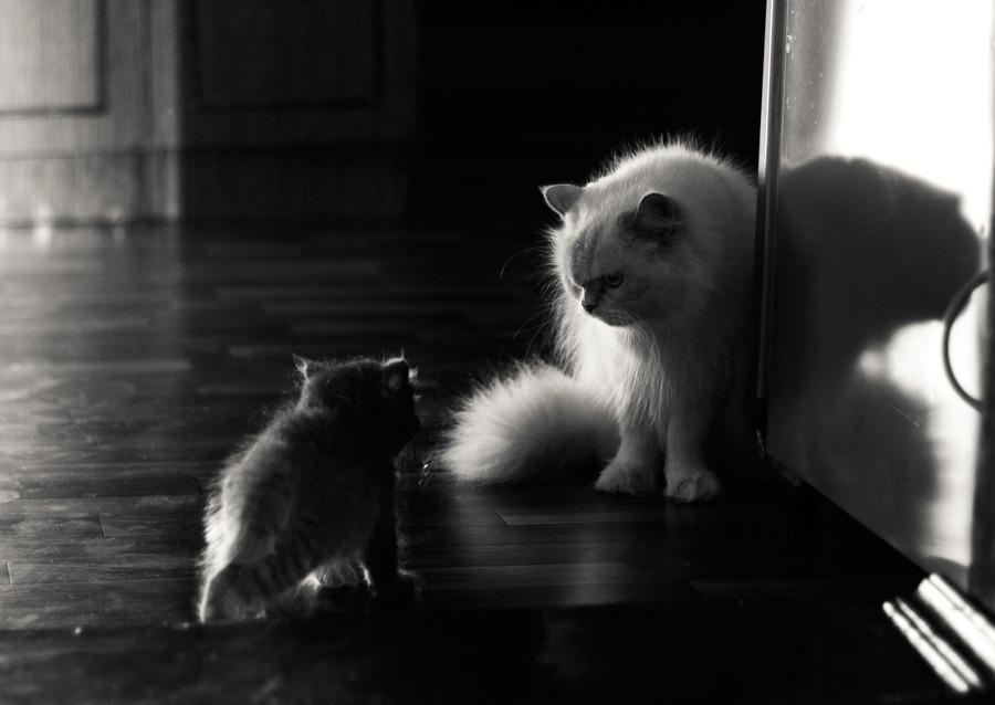 Kittens play