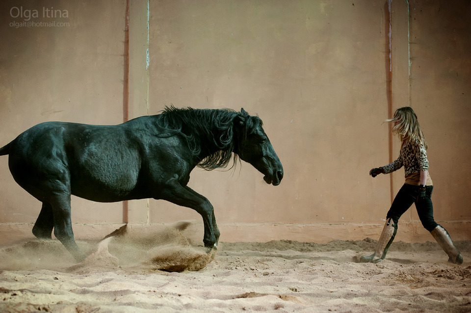 Beutiful black horse
