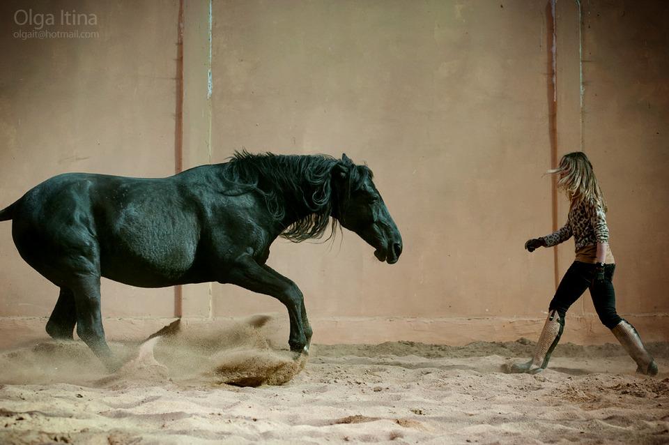 Beutiful black horse