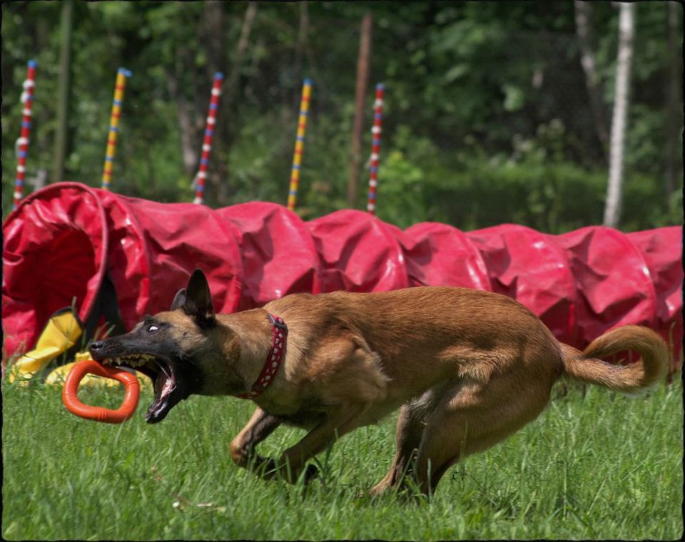 Training of a dog