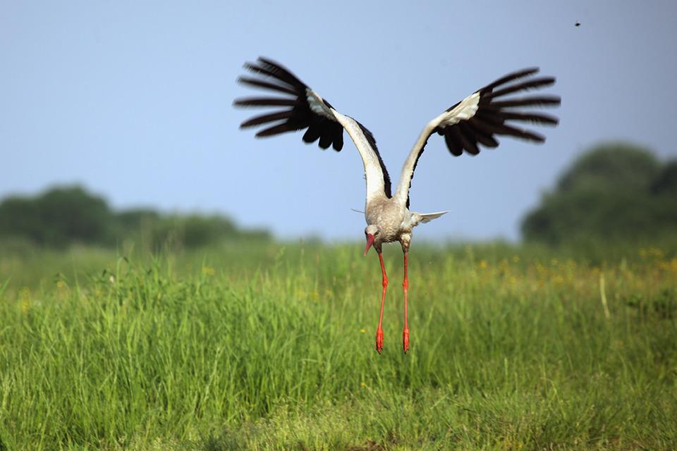 Heron lands