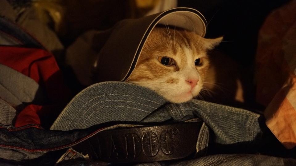 Cat in caps